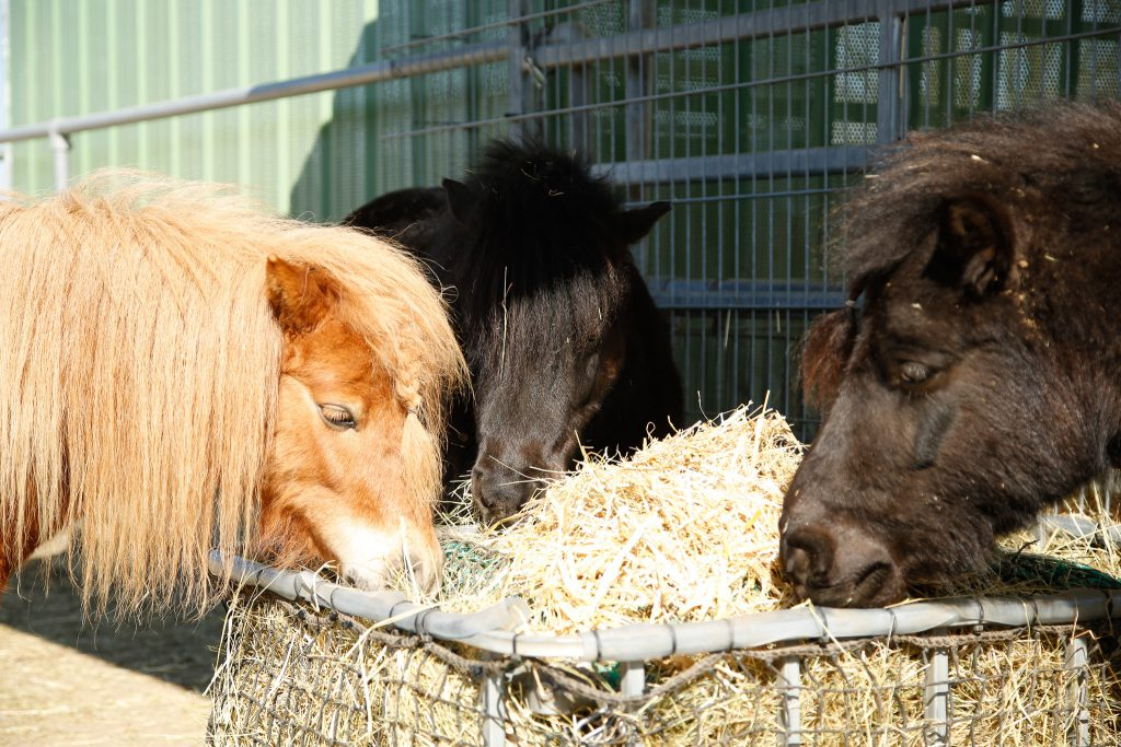 Pony-Kleingruppe am Heinrichshof